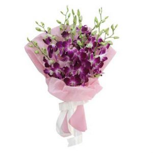 CF Special Orchids